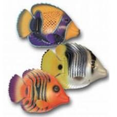 Rainbow reeffish tropical
