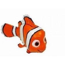 Rainbow reef Nemo